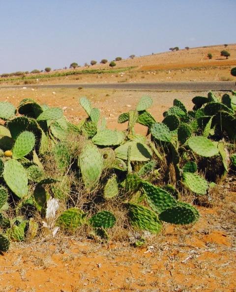 Marocco 208