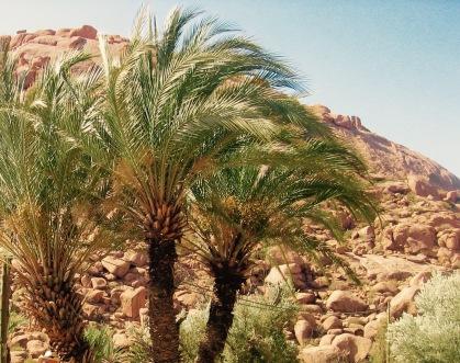 Marocco 391 (1)