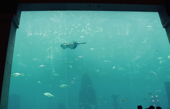 Okt- 2009 - Dubai 114